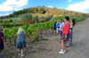 Tour enologico del Chianti Classico e Super Tuscan 3 - Partenza gio...