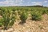 Tour privé des vignobles de la vallée du Rhône au départ d'Avignon...