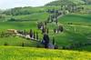 TOUR PRIVATO da Siena a Pienza, val d'Orcia, Brunello di Montalcino...