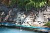Katoa Jet & Geothermal Manupirua Hot Pools Lake Rotoiti