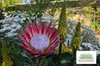 General Admission to the Ruth Bancroft Garden