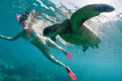Sea Turtle and Tropical Fish Snorkeling Adventure 4fc7c949-b55b-4ea2-9ea3-67a67a6f9e3f