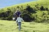 Private Day Tour Auckland - West Coast Bush Walk