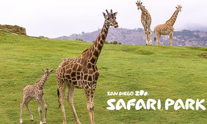 San Diego Zoo Safari Park San Diego Zoo Safari Park Groupon