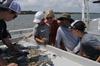 Shrimp Trawling Expedition