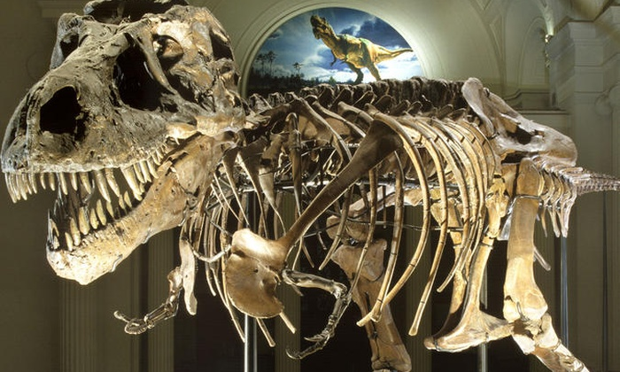 Image result for field museum chicago