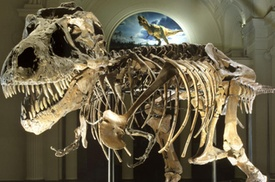 Field Museum - Chicago: Field Museum of Natural History Admission