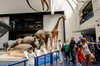 London Natural History Museum Dinosaur Discovery Family Tour