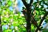 bird watching, interpretation trail
