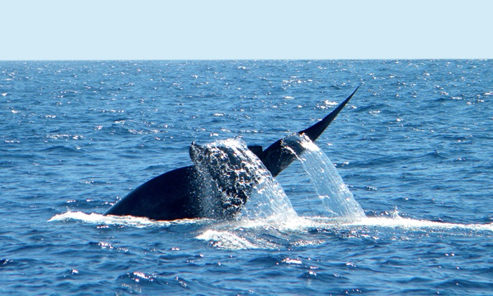 Hornblower Cruises & Events - Central San Diego: Hornblower Blue Whale Watching Adventure Cruise