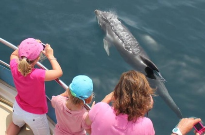 Crucero de primera clase en Gibraltar con safari para ver delfines Oferta en Groupon