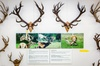 Personal tour through the World of Deer Museum which incl. world re...