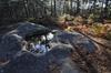 Visite guidée privée d'une journée complète à Fontainebleau et à Ba...