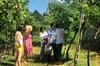 Gusta il Valpolicella in 3 aziende vinicole selezionate