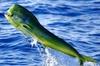 Miami Deep Sea Fishing Charter