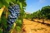 Dégustation de vins à Châteauneuf-du-Pape au départ d'Avignon, déje...