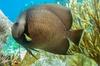 Half Day Snorkel Trip in the Florida Keys