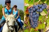 Paseo a caballo en un parque natural desde Barcelona y cata de vino...