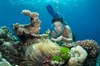 2-Day Snorkeling Experience in Great Barrier Reef (Twin Share Cabin)