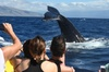 Early Bird Whale Watch Tour from Lahaina Harbor