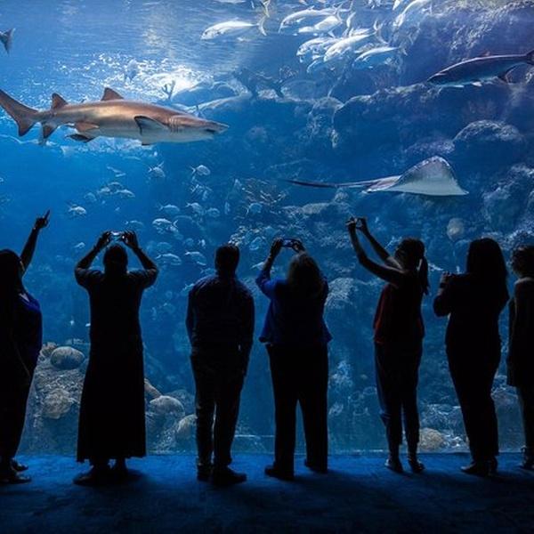 coupons for tampa bay aquarium