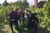 An insider's choice - Mornington Peninsula Wine Tour