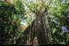 Yungaburra Heritage and Rainforest Tour - Yungaburra Pick up
