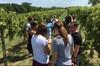Weston Wine Tour