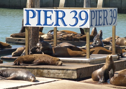 Pier 39 Parking Deals