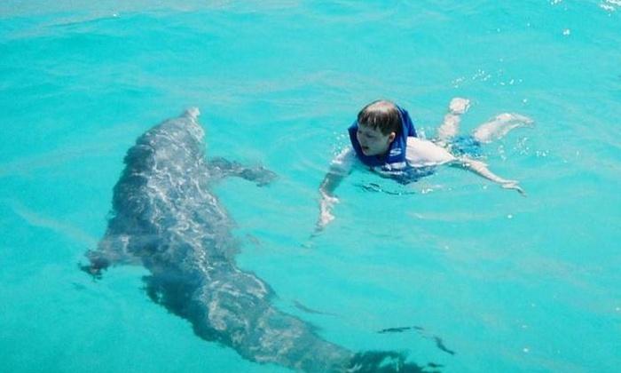 Panama City Beach Dolphin Tour With Snorkeling