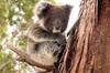 Island Life - Full Day Kangaroo Island Wildlife Tour
