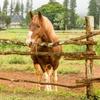 Equine Experience