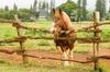 Four Seasons Resorts Lana'i - Kealia Kapu Ahupua`a: Equine Experience