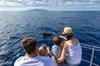 Avistamiento de delfines y ballenas en barco de vela exclusivo