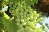 8 Hour Napa Valley Wine Tour