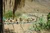 Paseo en camello en Fataga con barbacoa