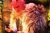 Sinister Stories of Salem - Boston: Salem Christmas Krampus Tour for Adults