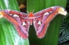 Admission to Butterfly Rainforest at the Florida Museum of Natural ...