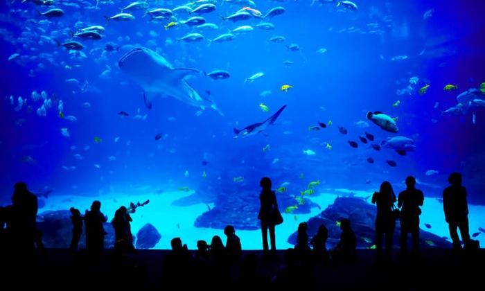Georgia Aquarium Atlanta Ga Groupon