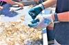 Hilton Head Shrimp Trawling Boat Cruise