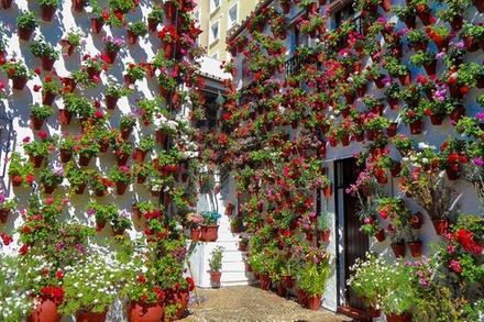 Visita guiada a los populares Patios de Córdoba