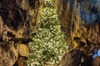 Treak Cliff Cavern Self-Guided Audio Tour during Christmas