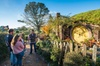 Small-Group Hobbiton Movie Set Tour from Auckland with Buffet Lunch