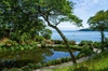 2-Hour Guided Tour of Cornish Garden with an Experienced Horticultu...