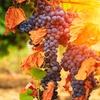 Grape Arizona Wine Event 2017 - Sunday October 29, 2017 / 1:00pm-5:...