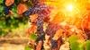Grape Arizona Wine Event 2017 - Copper Square: Grape Arizona Wine Event 2017 - Sunday October 29, 2017 / 1:00pm-5:00pm