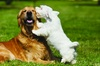 $20 For $40 Toward Grooming, Boarding Or Daycare