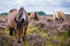 New Forest Day Out Private Tour from Southampton