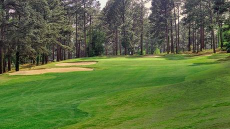Foxfire Resort & Golf - Grey Fox