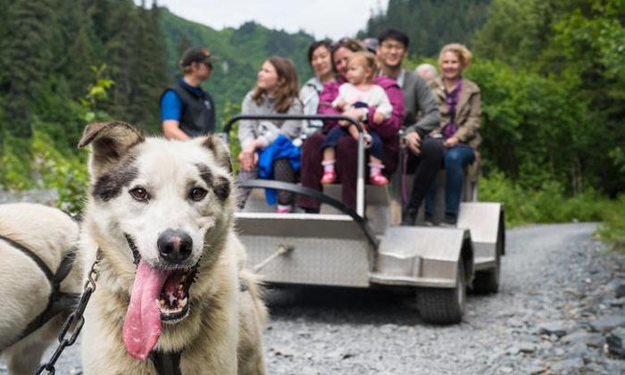 IdidaRide Sled Dog Tours, Inc - Seward: Wilderness Dog Sled Ride and Tour